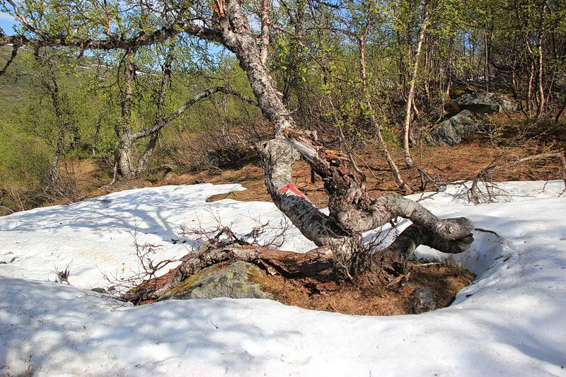 Ganz ohne Schnee ist es zwar nicht, doch der Weg ist begehbar.