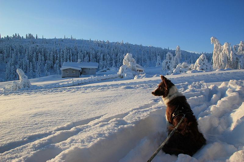 Manne wartet auf Skiläufer.