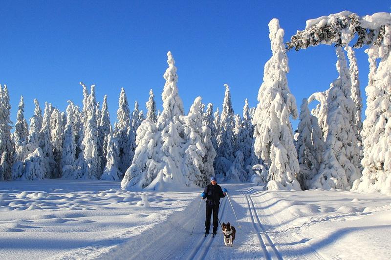 Manne ist ein toller Skihund!