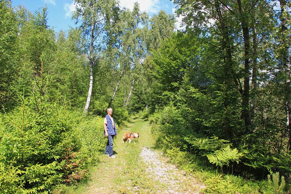Der Weg führt erst einmal durch lichten Wald.