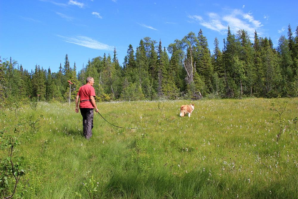 Leider kommen dann große Wiesen. Sie sehen toll aus, mit Wegweisern und Wollgras! Doch schon nach 1 km haben wir nasse Schuhe, denn es sind Schmodderwiesen.