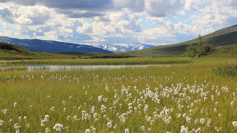 Tolle Wollgraswiese mit den Bergen im Hintergrund - ein Stück Erde zum Verweilen.