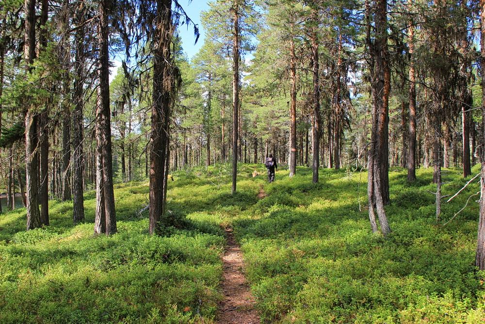 Die Halbinsel Åsarna mit ihren kleinen Seen und den Stein- und Sandstränden ist ein Wanderparadies. Man läuft durch regelrechte Blaubeerfelder - und kann nicht widerstehen!