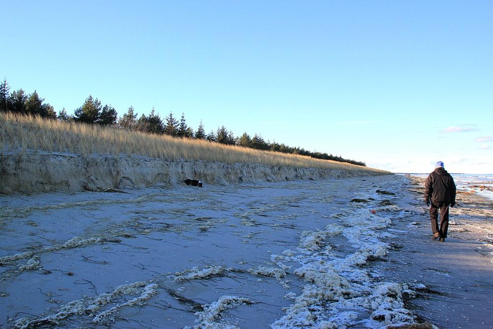 Die Dünen sind aber auch angefressen - hier zwischen Zingst und Prerow.
