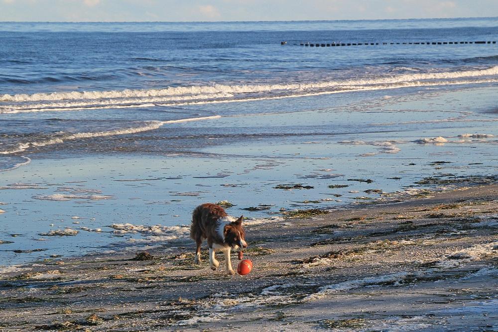 Und natürlich ist wieder viel Platz zum Flitzen am Strand.