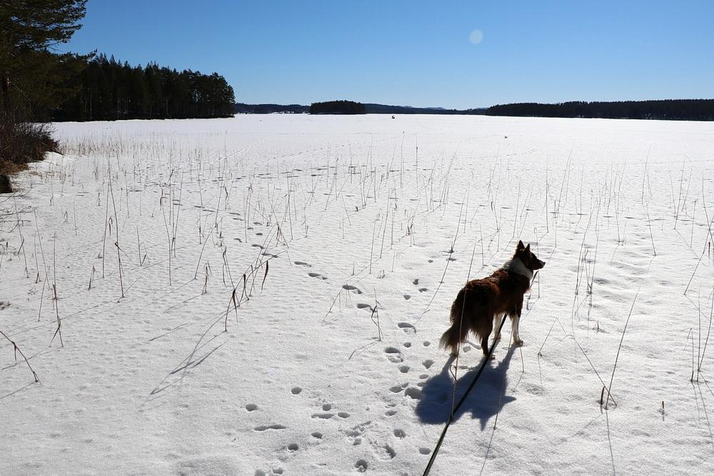 Pause am Kättbosjön, kurz vor Mora - Eis und Schnee, soweit das Auge reicht!