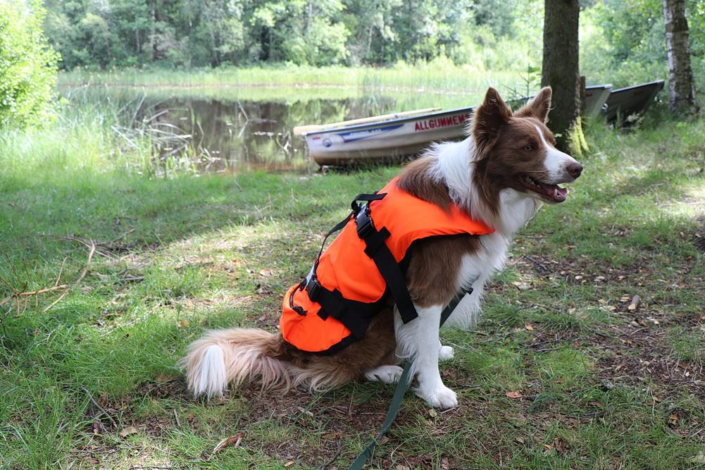 Für die Touren auf dem Stora Frillen hat unser Hund jetzt eine Schwimmweste - man weiß ja nie!!