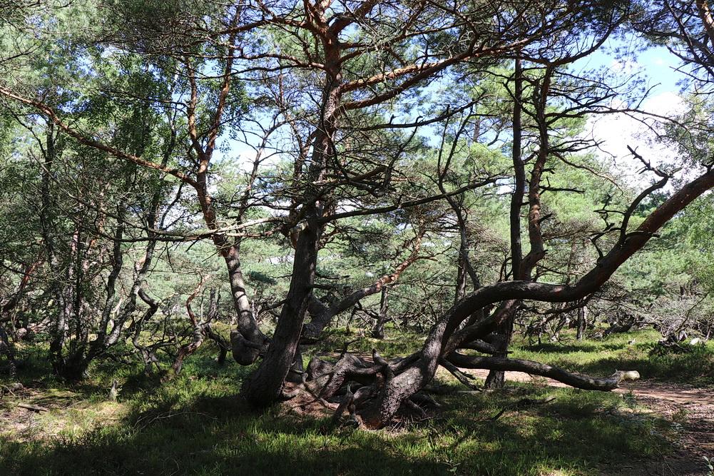 Gespensterwald Haverdal