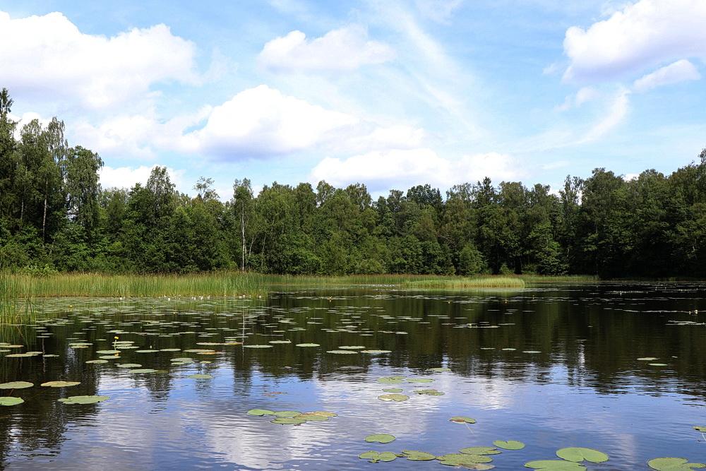 Am Ufer sind Schilf und Seerosen, einfach nur schön!