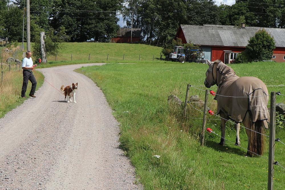 Eine unerfreuliche Begegnung für Manne. Das Pferd ist so groß, dass es verbellt werden muss.