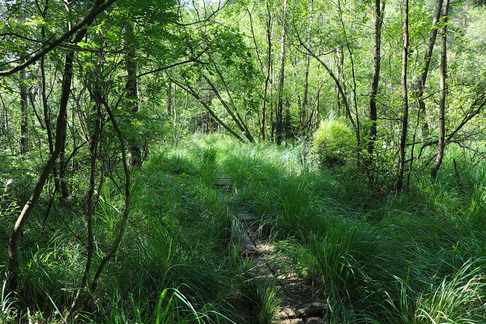 Der Hallandsleden! Wir wandern ein Stück durch völlige Wildnis und vernachlässigte Wege und Stege. Hier laufen bestimmt nicht viele lang!