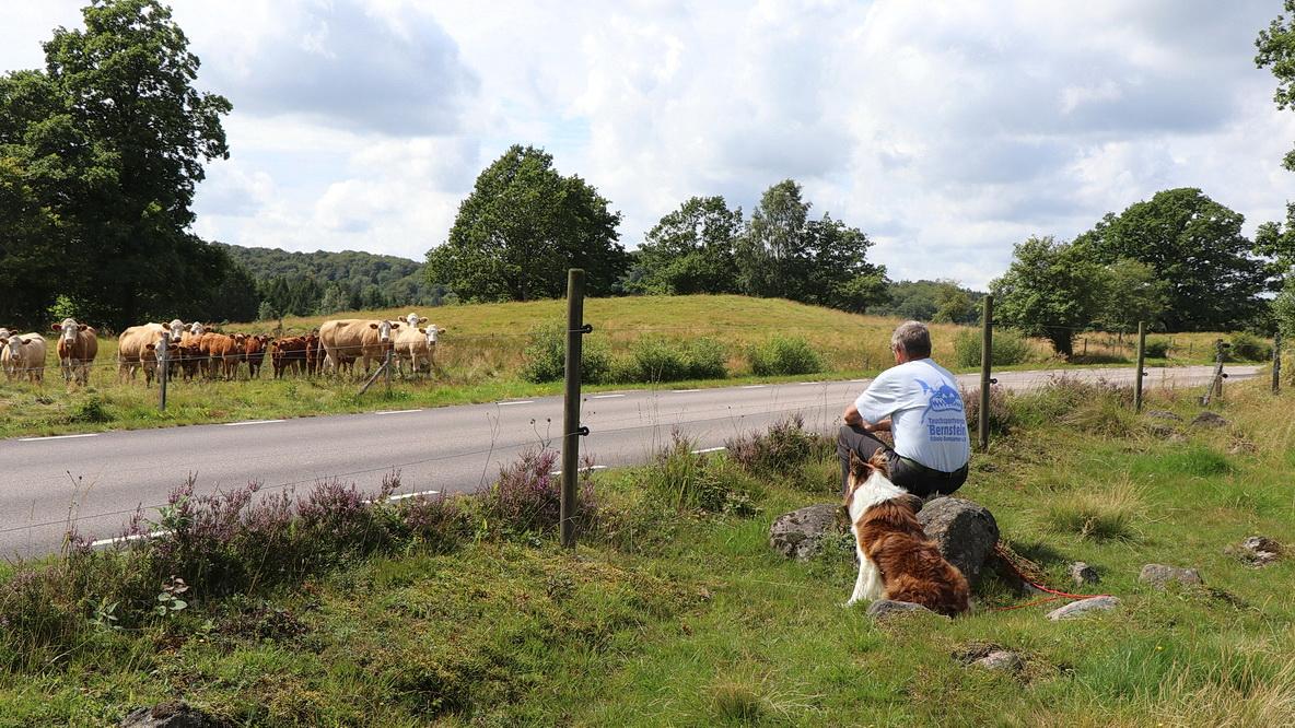 Tierische Begegnung der angenehmen Art. Getrennt durch die Straße beäugt man sich gegenseitig und jeder fühlt sich sicher!